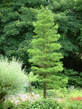 Crain Tree Farm Amp Nursery Home Page